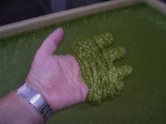 Duckweed - Duckweed is one of the best-kept secrets of Urban Farming. Reda more at link => http://www.microponics.net.au/?p=181