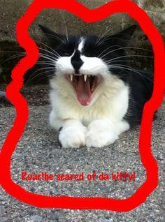 Humor animals