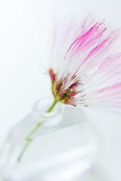 pink fragile flower