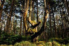 Weretree, near Yakan Pt. on Tow Hill Road, BC, Canada.by Haida Gwaii Photos Charlotte City, Haida Gwaii, Enter The Dragon, Small Ponds, Explorer, Closer To Nature, Archipelago, Archie, Cemetery