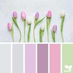 today's inspiration image for { spring tones } is by @c_colli ... thank you, Cristina, for another gorgeous #SeedsColor image share!