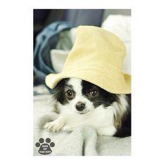 """DOG OF THE DAY  Jun.23,2012 @nakadekeigo"