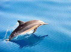 """Dolphin"" by CHAO-CHIH CHOU, via 500px."
