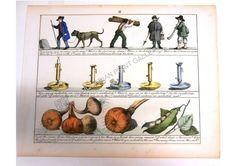 Children Education Maths Governess Vegetables labourers candlesticks Antique ... #woodengraving