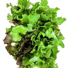 Leafy greens - 14 Foods That Can Make You Sick - Health Mobile