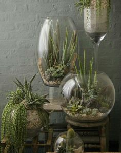 If you still do not have a terrarium in your home, this will be your time to do it. You can find many terrarium ideas as they are really present in most homes and offices. This decoration idea looks really cool and natural. You will find it in many shapes Garden Terrarium, Succulent Terrarium, Cacti And Succulents, Planting Succulents, Garden Plants, House Plants, Planting Flowers, Glass Terrarium Ideas, Indoor Succulent Garden