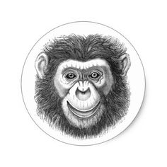 Chimpanzee Stickers - animal gift ideas animals and pets diy customize