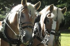 Wedding Carriage, Horse Drawn, Farm Wedding, Special Events, Horses, Animals, Animaux, Horse, Animal