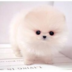OH MY FREAKING JESUS.... LOOK AT THIS LITTLE MARSHMELLOW PUFF I JUST WANNA SQUEEZE THE CRAP OUT OF IT