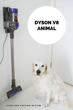 No, it's not a stylish piece of furniture or a beautiful piece of art but a cordless vacuum. A CORDLESS VACUUM! Cordless Vacuum Reviews, Cordless Vacuum Cleaner, Gift Suggestions, Gift Ideas, Amazon Beauty Products, Steam Cleaners, Spot Cleaner, Pet Home, Birthday List