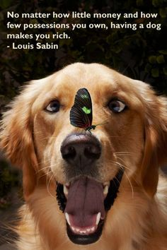 No matter how little money and how few possessions you own, having a dog makes you rich.  -- Louis Sabin