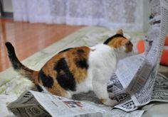 ネコと新聞11