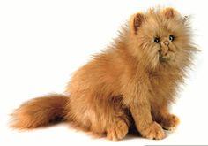 Hansa 4223 Cat Red