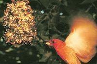 How to Make Homemade Bird Seed Treats? (7 Steps) | eHow