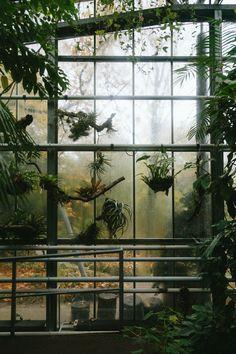 Hortus Botanicus Amsterdam, the epiphytes collection.