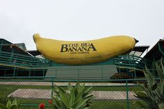 Big Banana, Coffs Harbour, New South Wales, Australia