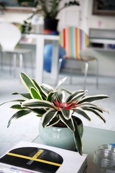 14 Houseplants That Can Survive in Even the Darkest Corner - 15 Low-Light Houseplants