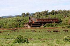 The Ark, Aberdare National Park, Kenya