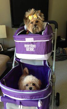 Kids new stroller