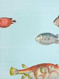 Acquario Wallpaper Pale blue brush stripe wallpaper with vibrant tropical fish print.