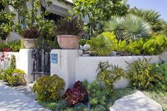 This is a fabulous example of a low stucco wall entrance-way that can lead into the courtyard. The plantings are beautiful. Love the positioning of the planters on the top of the entrance sides.