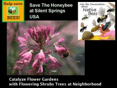In the latest survey published by the researchers in 2007,  in nearly half  the  States in USA,  are effected.  I live in Virginia, and this State as of 2007 was not effected, nor was West Virginia  or Maryland to the West.   But both Pennsylvania and North Carolina are effected by this decline of  pollinator bees in this last agri-science survey.