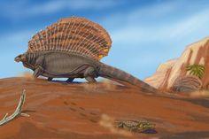 Pelycosaurs | herbivorous pelycosaur with a sail – Edaphosaurus,