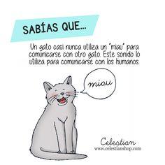 lenguaje de los gatos www.celestianshop.com