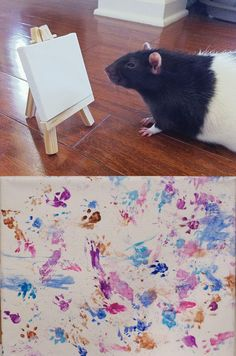 Winston, artistic rat ;) wish i had done this with my ratties and hammies
