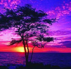 "216 Likes, 3 Comments - ViralNova.com (@viralnova) on Instagram: ""I <3 🍊 sunsets. #photooftheday #picoftheday #photography #sunset #beautiful #nature #love #travel…"""