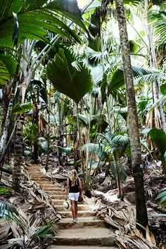 The largest species of Palm fronds in the entire world. Right here in the Valle De Mai - Seychelles…