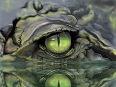 Croc eye Animals Beautiful, Beautiful Eyes, Beautiful Creatures, Alligators, Crocodile Eyes, Crocodile Logo, Reptile Eye, Animals And Pets, Cute Animals