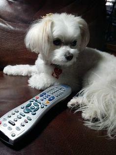 """Zoe the Therapy Dog says """"life does not come with a remote control, you've got to get up and change it""""!"""