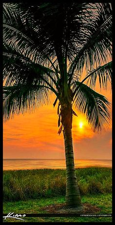 Naples Florida Coconut Palm Tree at Sunset