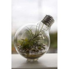 Terrarium in a bulb... too small as a centerpiece, but a neat idea to keep in mind
