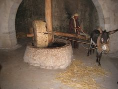 First century method of olive oil-pressing