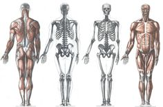 AnatoRef | Anatomy and Proportions Top Image Row 2 & 3 Row...