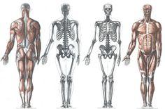 AnatoRef | Anatomy and Proportions Top Image Row 2 & 3 Row...