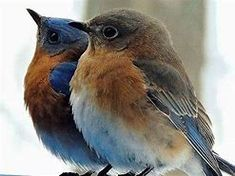 14 Amazing Blue Colored Birds in The Wor. - Amazing Blue Colored Birds in The World - Cute Birds, Pretty Birds, Beautiful Birds, Animals Beautiful, Cute Animals, Birds 2, Angry Birds, Exotic Birds, Colorful Birds