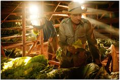 Great action shot: tobacco farmer