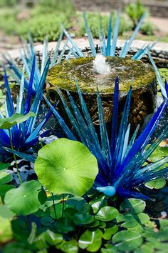 Chihuly - Erbium Fiori in the waterlily pool.