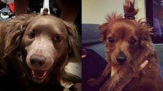 Dog buns are the latest hair trend. http://beautyeditor.ca/2015/03/28/soo-joo-park-loreal