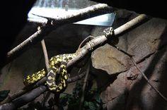 snake photo by: Nea-Mari Vallin