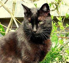 Blacky, schön, schlau, charmant, sucht Menschen und Garten.  www.agtiere.de