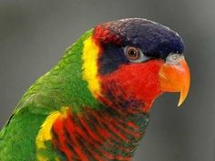 34 Stunning Pictures Of Exotic Birds Rare Birds, Exotic Birds, Most Beautiful Animals, Beautiful Birds, Parrot Wallpaper, Pink Cockatoo, Colorful Parrots, Colorful Birds, African Grey Parrot
