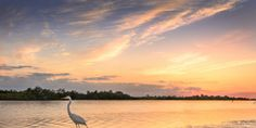 Protect Florida's Environment For All and Forever ~