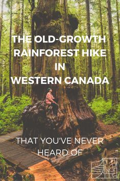 Discover one of Canada's last remaining old-growth rainforests in British Columbia. This ecotourism adventure on Vancouver Island is accessible and also home to one of the largest cedar's in the world. Canada Travel, Travel Uk, Travel Tips, Rainforests, Responsible Travel, Cultural Experience, South Of France, Vancouver Island, British Columbia