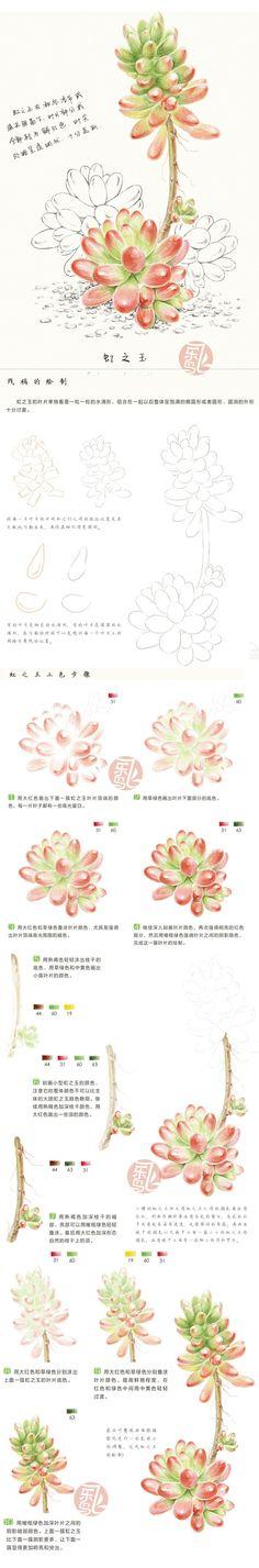 Color Pencil Drawing Ideas Watercolor or colored pencil succulent plant