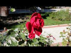 Vídeo de la rosaleda Ramón Ortíz, en el parque del Oeste de Madrid.