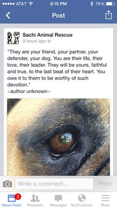 Devotion, loyalty, love Boxer Rescue, Rescue Dogs, Animal Rescue, Loyalty, Your Dog, Animals, Life, Animales, Animaux